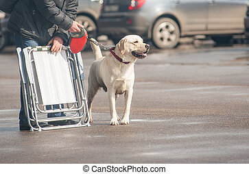 hans, labrador, visa, efter, hund, ägare