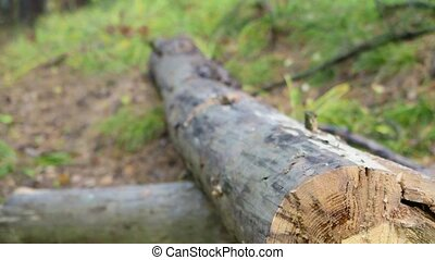 lumberjack who chopping wood with an axe - hans of ...