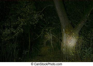 hanté, forêt, nuit