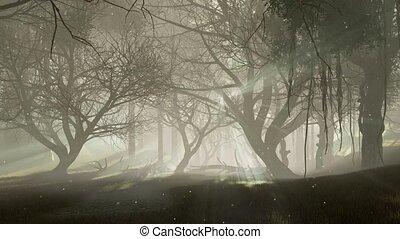 hanté, lumières, luciole, crépuscule, 4k, magie, forêt
