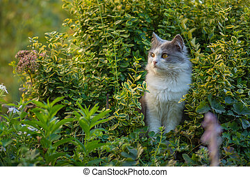 Happy beautiful cat stands in the garden among flowers