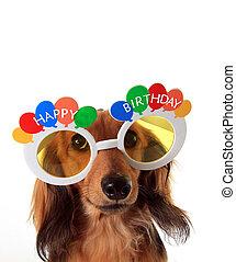 Happy Birthday dachshund - Dachshund puppy wearing Happy...