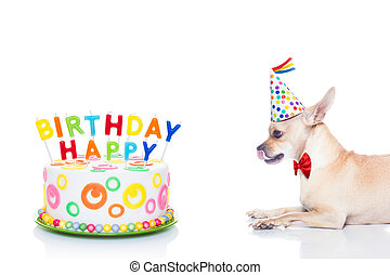 happy birthday dog - chihuahua dog hungry for a happy ...