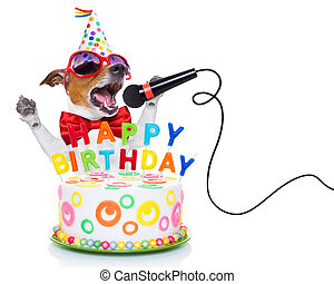 happy birthday dog - jack russell dog as a surprise, singing...