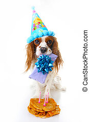 Happy birthday dog photo. Cavalier king charles spaniel puppy dog celebrate 3. birthday. Three years old puppy with birthday cake and gift. Dog holding gift on white background.