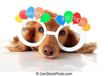 Happy Birthday dog - Dachshund puppy wearing Happy Birthday...