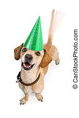 Happy Birthday Dog Wagging Tail