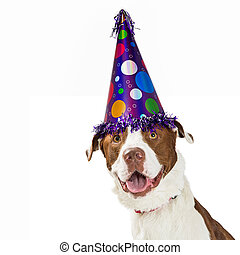 Happy Birthday Dog Wearing Party Hat