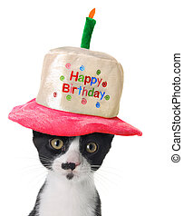 Happy Birthday kitten - Kitten wearing a Happy Birthday hat.