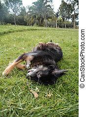 Happy-black-dog-in-the-park