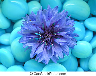 happy blue - photograph of a blue flower against a...