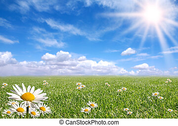 Happy Bright Spring Day Outside - Green Grass, Blue Sky, and...