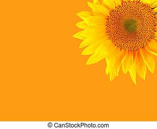 Happy Bright Sunflower on Orange Background
