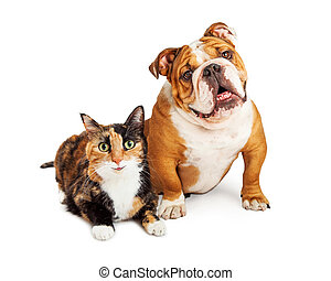 Happy Calico Cat and Dog Together