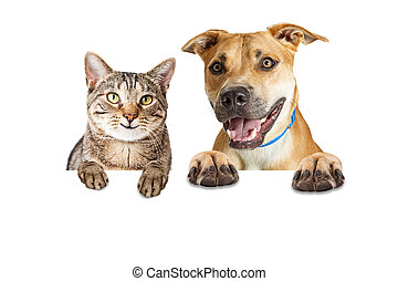Happy Cat and Dog Over White Banner - Dog and cat together...