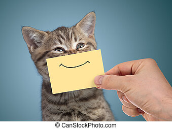 happy cat portrait with funny smile on cardboard