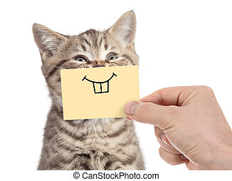 happy cat with funny smile on cardboard isolated on white -...