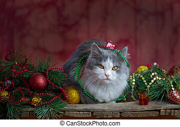 Beautiful Christmas background. Christmas cat lies on a wooden background with Christmas toys and garlands. Blurry empty background and copy space for your message.