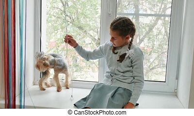 happy child girl with her dog sitting window sill at sunset. little girl is played with a pet dog yorkshire terrier. girl and lifestyle dog concept