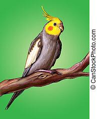 Happy cockatiel - Male cockatiel perched on a tree branch. ...