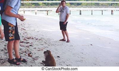 Happy couple feeding monkey in Monkey beach in Malaysia....