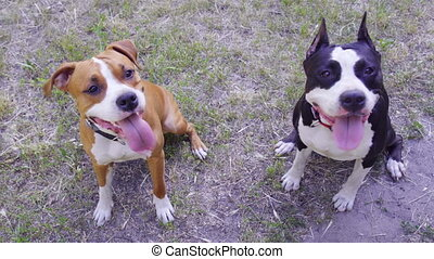happy cute dogs are sitting and looking at the camera