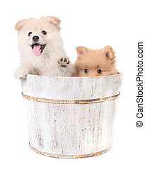 Puppies Being Playful on a White Background