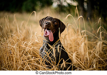 Happy dark color dog sitting sticking out his tongue in the field