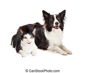 Happy Dog and Cat Laying Together