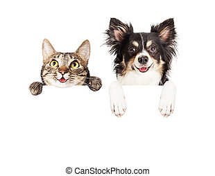 Happy Dog and Cat Over White Banner - Happy and smiling...