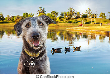 Happy Dog at Park in Summer - Happy and smiling dog in front...