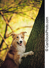 happy dog border collie at the tree