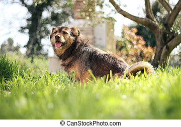 happy dog in green field