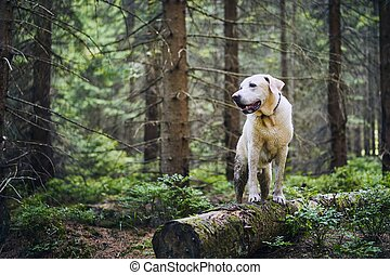 Happy dog in nature