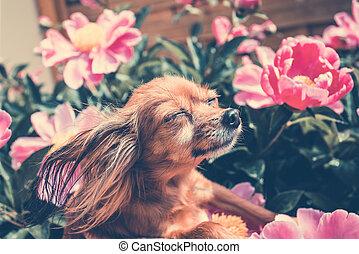 Happy Dog in the Sun