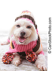Happy Dog in warm woolen sweater and scarf