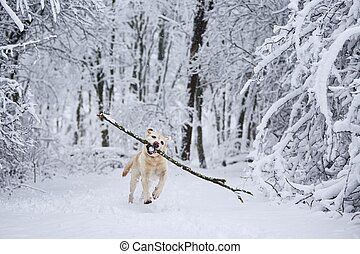 Happy dog in winter
