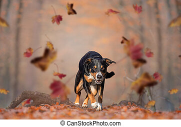 Happy Dog is Running on the Autumn Leaves Ground