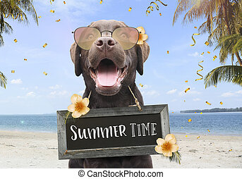 Happy dog on a summer holiday on the beach between palm trees and flowers with text on sign board summer time