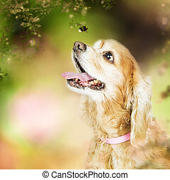 Happy Dog Outdoors Looking at Bee