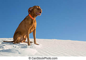 happy dog outdoors sitting in white sand