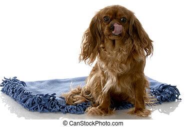 happy dog sitting on blanket