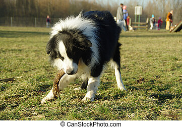 Happy dog with branch on grass