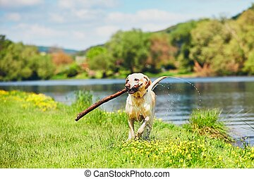Happy dog with stick