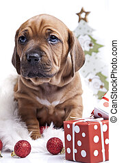 happy doggy in christmas decoration