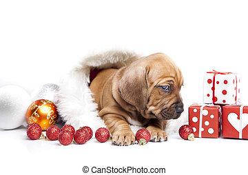Happy doggy - Happy doggy