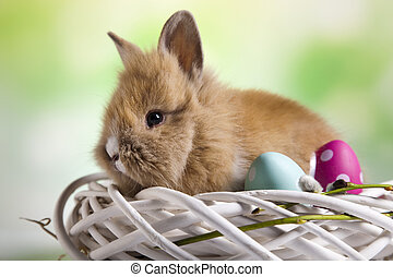 Happy easter, Baby bunny, springtime colorful bright theme