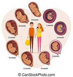 Happy expecting couple, human embryo evolution stages, flat vector illustration. Month-by-month pregnancy stages, embryonic and fetal development.