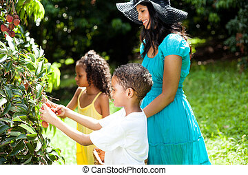 happy family picking litchis outdoors