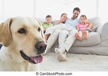 Happy family sitting on couch with their pet labrador in foreground at home in the living room